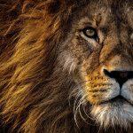 Löwen brüllen niemals leise